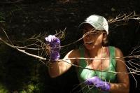 Dartmouth Merrcury Food Web Study (1 of 2)