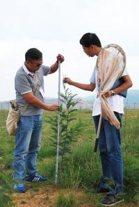 Measuring Black Wattle Tree