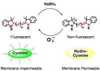 Hydrocyanine Structure