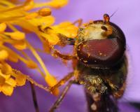 Pollen Detection