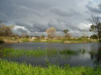 Madrona Marsh Preserve