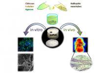 Halloysite-Doped Biocomposite Scaffolds