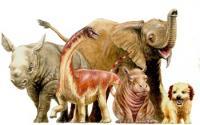 Demetrios Vital <em>Rapetosaurus</em> Baby