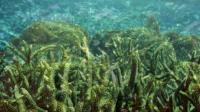 Ocean Acidification in Florida