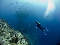 Coral Reefs, Vamizi Island