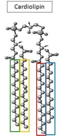 Cardiolipin Molecule