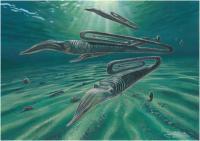 Typical Cretaceous Marine Environment in Antarctica