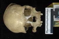 Pestera Muierii Woman's Skull