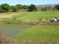 Crops in Madagascar