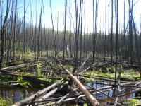 Fire Damage in Peat Bog