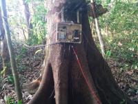 Arduino on Tree