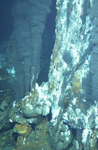 Nautilia Profundicola