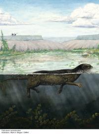 Puijila darwini Reconstruction