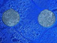 Solar Cell Cosmos