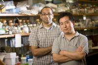 Anand Pai and Lingchong You, Duke University