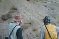 Burrowing Dinosaur Find Down Under (1 of 2)