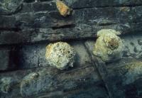 2 Cannon Balls Found in the Shipwreck