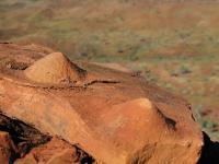 Conical Stromatolites