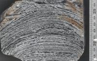 Close-up of Domical Stromatolite