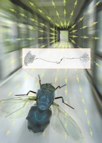 Flux Field Illustration