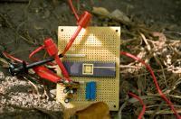 Tree Power Circuit