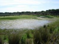 Zahillo Lagoon in Do�ana National Park