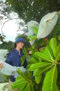 Fig Pollination Study