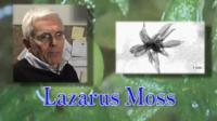 Lazarus Moss