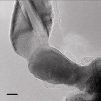 Gold nanowires Weld