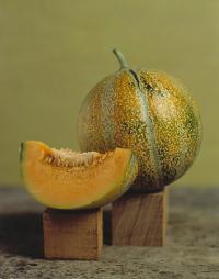Petite Gris de Rennes Melon