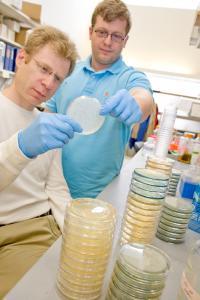 Leonid Kruglyak and Ian Ehrenreich, Princeton University