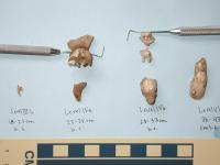 Samwell Cave Specimens