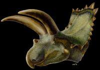 <i>Coahuilaceratops</i> Rendering