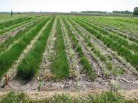 Agronomy Farm