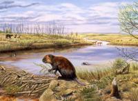 Ellesmere Island Beaver Pond Site in Pliocene
