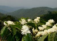 Shade-coffee Farms