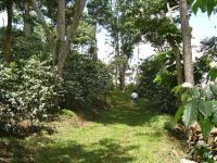 Shade Coffee Farm in Chiapas, Mexico
