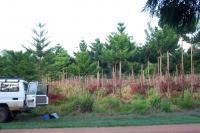 Monoculture Plantation