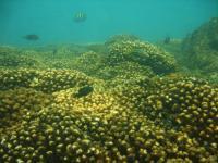 Las Perlas Archipelago Coral Reef