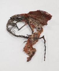 <I>Labidolemur kayi</I> Fossil
