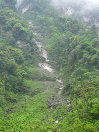 Landslide Regeneration