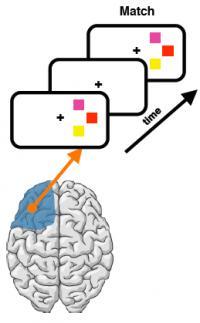 Visual Field Test of Prefrontal Cortex