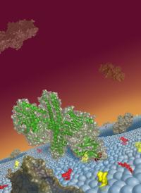 Botulinum Neurotoxin Binding