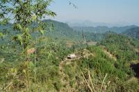 Reforestation in Vietnam