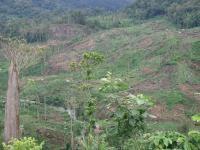 Human Encroachment into Tiger Habitats of Southern Sumatra