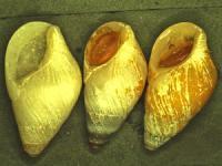 Opaque Shells