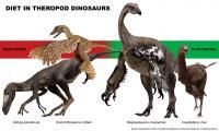 4 Theropod Species