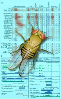 Fly Chromatin