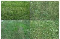 Turfgrass Fertility, Pesticide Programs Compared