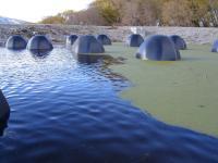 Half-Submerged Poo-Gloos